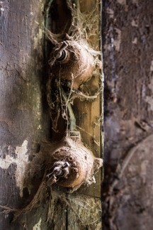 Light Switches, Stables