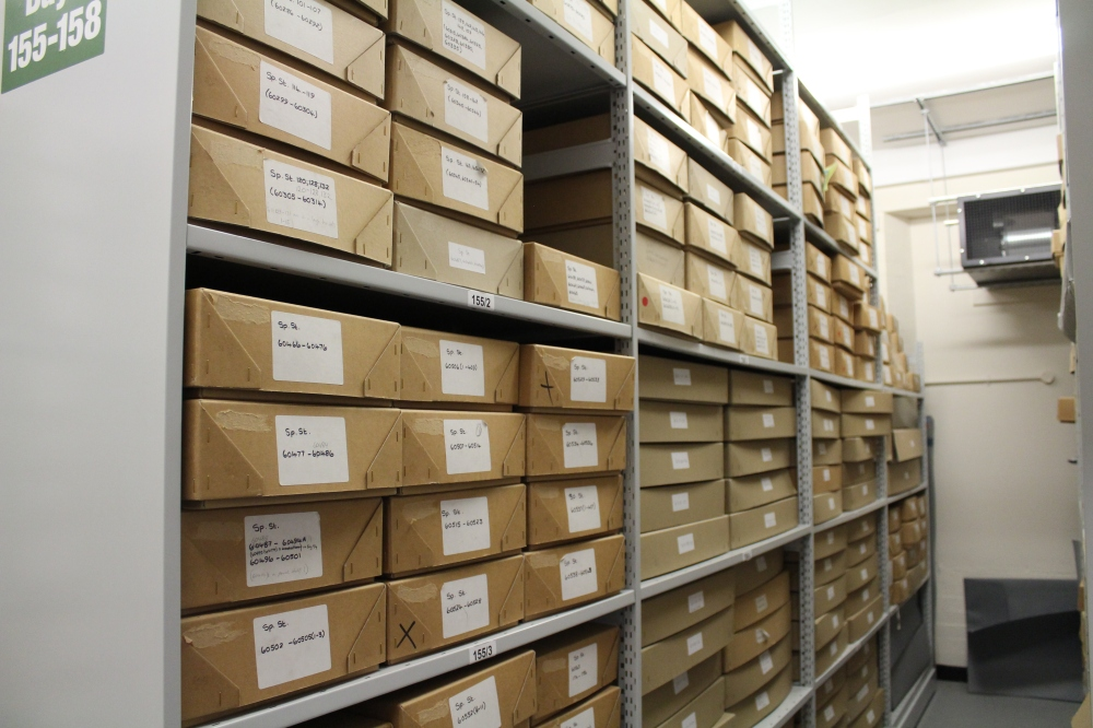 Archive boxes image