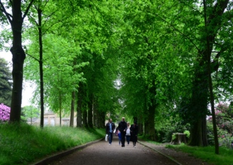 The Avenue of Limes - Credit Scott Merrylees, courtesy Yorkshire Post