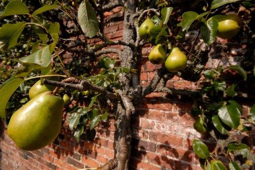 225-cannonhallguidebook_2076-pear-day